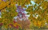 Fall_Walk_Prospect_Park